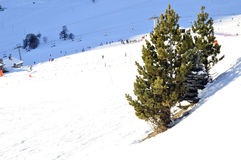 Árboles en las cuestas del esquí Foto de archivo libre de regalías