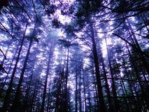 Árboles en las montañas Fotografía de archivo