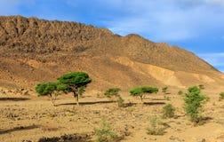 Árboles en las montañas del fondo, Marruecos Foto de archivo
