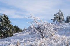 Árboles en las montañas del invierno foto de archivo