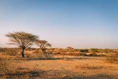 Árboles en llanos de África foto de archivo