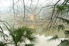 árboles en lluvia en jardín botánico imagenes de archivo