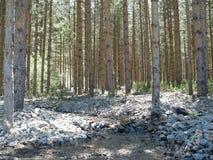 Árboles en los bosques de Turquía d Y fotografía de archivo