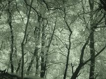 Árboles en los bosques de Turquía d Y imagen de archivo libre de regalías