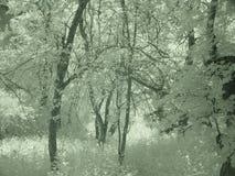 Árboles en los bosques de Turquía d Y foto de archivo