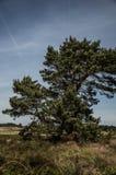 Árboles en los campos Fotografía de archivo