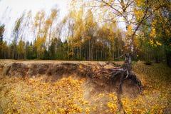 Árboles en los colores de los ricos del bosque del otoño Imagen de archivo libre de regalías