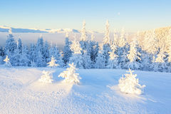 Árboles en los copos de nieve mágicos Fotografía de archivo libre de regalías