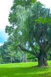 Árboles en los jardines botánicos reales, kandy, Sir Lanka Foto de archivo