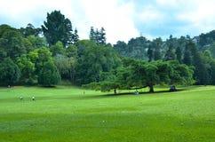 Árboles en los jardines botánicos reales, kandy, Sir Lanka Imagen de archivo libre de regalías