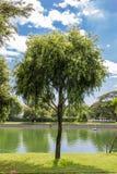 Árboles en los parques Imágenes de archivo libres de regalías