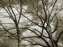Árboles en marrón Imágenes de archivo libres de regalías