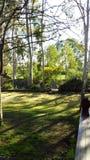 Árboles en mi jardín fotos de archivo libres de regalías