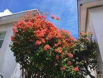 Árboles en Miami, la Florida Fotos de archivo