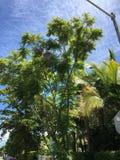 Árboles en Miami, la Florida Foto de archivo libre de regalías