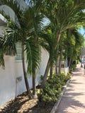 Árboles en Miami, la Florida Fotografía de archivo