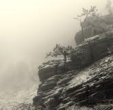Árboles en niebla Fotografía de archivo