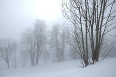 Árboles en niebla Fotos de archivo libres de regalías