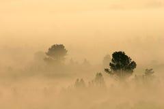 Árboles en niebla Foto de archivo libre de regalías