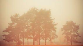 Árboles en niebla Fotos de archivo