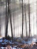 Árboles en niebla del invierno imagenes de archivo