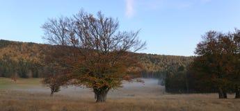 Árboles en niebla del otoño Foto de archivo libre de regalías