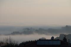 Árboles en niebla Siena, Toscana, Italia Imagen de archivo