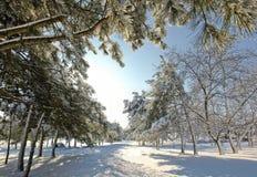 Árboles en nieve imagen de archivo