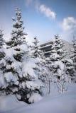 Árboles en nieve Imagen de archivo libre de regalías