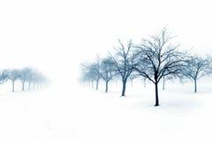 Árboles en nieve Imágenes de archivo libres de regalías