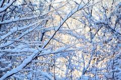 Árboles en nieve en el invierno Imagen de archivo libre de regalías