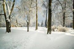 Árboles en nieve en el parque del invierno Foto de archivo libre de regalías