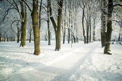 Árboles en nieve en el parque del invierno Imagen de archivo