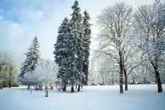 Árboles en nieve en el parque del winte Fotografía de archivo