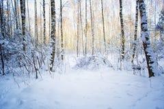 Árboles en nieve en la madera del invierno Fotografía de archivo