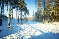 Árboles en nieve en la madera del invierno Imagen de archivo