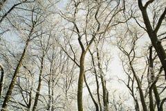 Árboles en nieve en la madera del invierno Fotografía de archivo libre de regalías