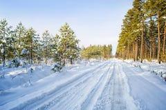 Árboles en nieve en la madera del invierno Camino forestal en el Mak de la KOH Imágenes de archivo libres de regalías