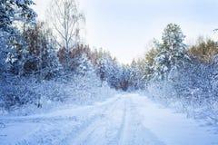 Árboles en nieve en la madera del invierno Camino forestal en el Mak de la KOH Imagen de archivo
