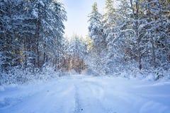 Árboles en nieve en la madera del invierno Camino forestal en el Mak de la KOH Fotos de archivo