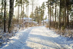 Árboles en nieve en la madera del invierno Camino forestal en el Mak de la KOH Foto de archivo libre de regalías