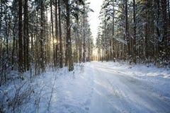 Árboles en nieve en la madera del invierno Camino forestal en el Mak de la KOH Imagenes de archivo