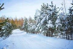 Árboles en nieve en la madera del invierno Camino forestal en el Mak de la KOH Fotos de archivo libres de regalías