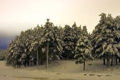 Árboles en noche del invierno Fotografía de archivo