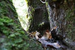 Árboles en Oregon Fotos de archivo libres de regalías