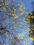 Árboles en Oslo fotografía de archivo