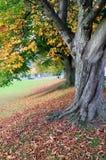 Árboles en otoño fotos de archivo libres de regalías