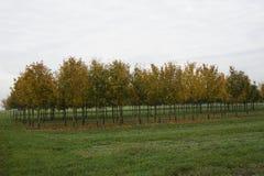 Árboles en otoño Imagen de archivo