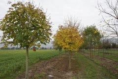 Árboles en otoño Foto de archivo libre de regalías