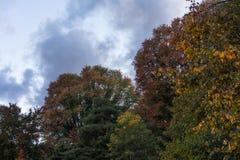 Árboles en otoño con verde amarillo rojo de las hojas coloridas con temporada de otoño del cielo y de las nubes Fotografía de archivo libre de regalías